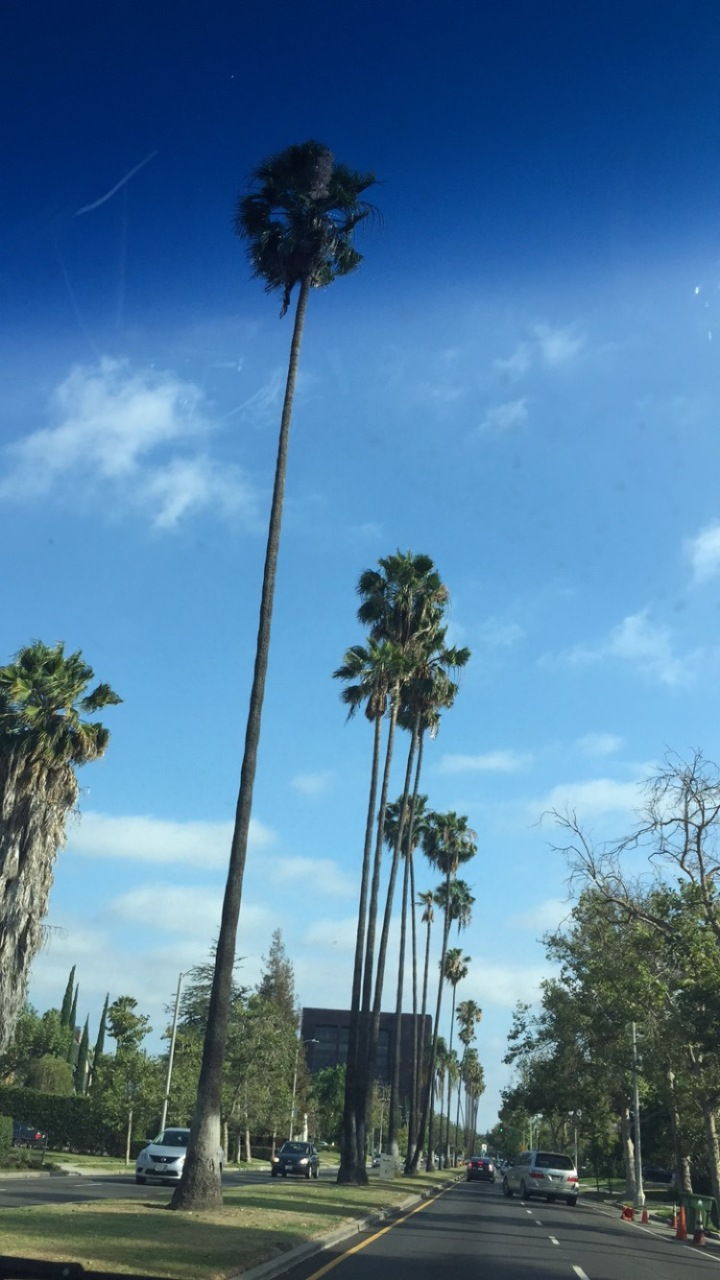 It Doesn't Rain in SouthernCalifornia